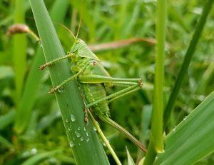 Pest Control in Overland Park KS