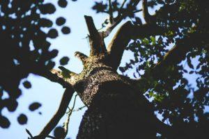 emerald ash borer disease control