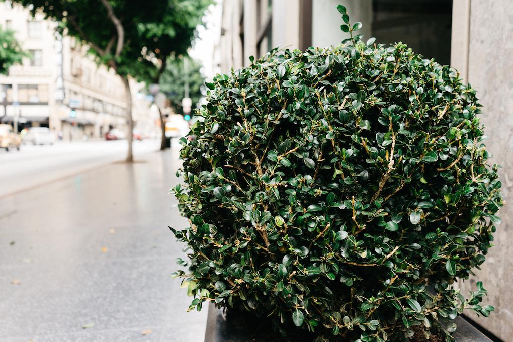 tree and shrub disease control